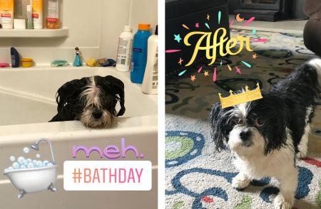Sammie's bath day